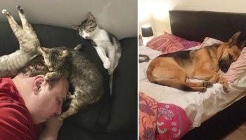 Чужая кроватка – теплее и мягче! 17 случаев, когда животные отжали у людей спальное место