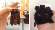 15 самых необычных летучих мышей в мире