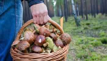 37-летний мужчина ушел за грибами в лес и заблудился. Нашли его через месяц…