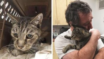 Очень трогательная встреча мужчины и его котика, спустя 7 лет
