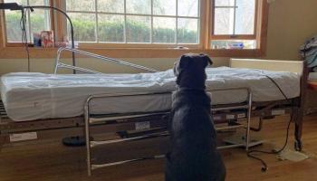 Не понимая, что хозяина уже нет в живых, преданный пес ждал его у больничной койки