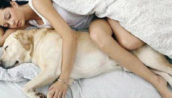 7 весомых аргументов разрешить вашей собаке спать в кровати