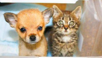 Котик и щенок так подружились, что произошло чудо: больной щенок — пошел на поправку