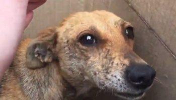 В коробке лежали собака с детенышами, которые нуждались в неотложной медицинской помощи
