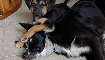 Непростые отношения между братьями и сестрами бывают даже у собачек. И вот вам 12 примеров этому