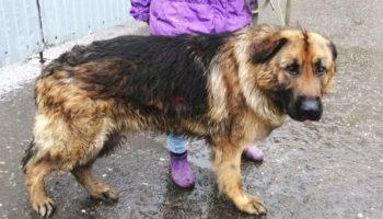 Работники завода заметили огромного пса, который поселился на территории