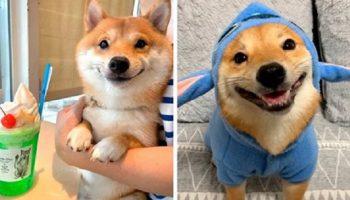 Знакомьтесь — щенок с самой очаровательной улыбкой в мире, который живет в Японии