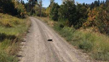 Пожарная команда из штата Колорадо, нашла в глуши маленькую собачку, которую бросили