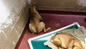 Собака пряталась в угол и вздрагивала от каждого шороха