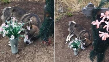 Долгих 3 года, провел на могиле хозяина пес из Кривого Рога
