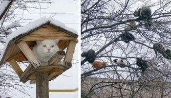 20 кошек, которые обживают деревья, притворяясь птичками