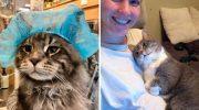 Коты тоже могут быть «хорошими девочками и мальчиками»! 30 милых доказательств этому