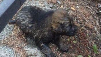 Крошечного щенка спас из сточной канавы 12-летний мальчик