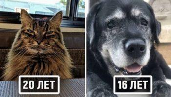 20 домашних животных-пенсионеров, которые уже преодолели 10-летний возраст, но не потеряли своего великолепия