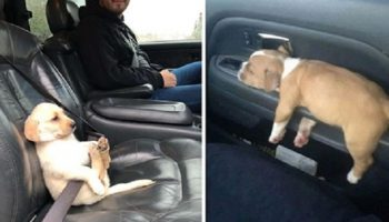 Обычную поездку в машине превратили в знатную комедию эти 20 милых собаченций