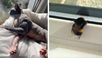 20 примеров, когда природа зачем-то посадила зверушек в тела неподходящего размера и формы