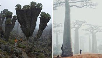 20 невероятных чудес природы, которые заставляют поверить, что мы уже на другой планете