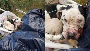 Собака находилась на грани жизни и смерти: ее привязали к куче мусора и бросили