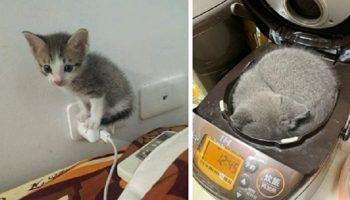Оказывается, котики могут любую вещь легко превратить в свое спальное место