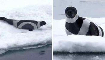 Уникумы из мира животных, которых судьба одарила черно-белым окрасом