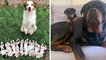 16 заботливых звериных мамуль, очень довольных своими детками