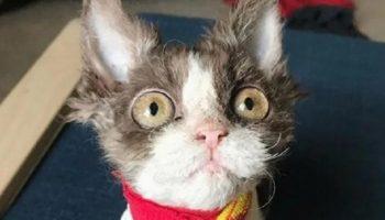 История Аппы — кошки с отталкивающей внешностью из-за врожденного дефекта, которую никто не хотел забирать из приюта
