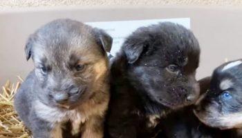 Спасая замерзающую собаку, волонтеры выяснили, что в трубе от холода прячутся и ее малыши