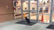 Возле дверей школы, каждое утро сидел пес, виляя хвостом и ожидая помощи