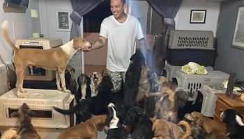 Чтобы спасти их от урагана, парень спрятал у себя дома 300 бездомных животных
