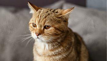 Как за хорошее поведение правильно хвалить кошку