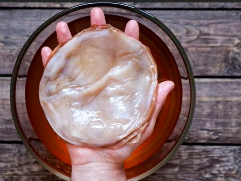 Чайный гриб, с помощью которого изготовляли напиток, утоляющий жажду.