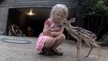 Маленькая девочка помогла крошечному олененку, который просил помощи