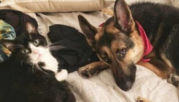 Почувствовав, что собака заболела, кот — лекарь стал о ней заботиться