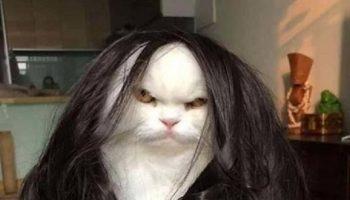 Кошки в естественной среде обитания: такие харизматичные и забавные