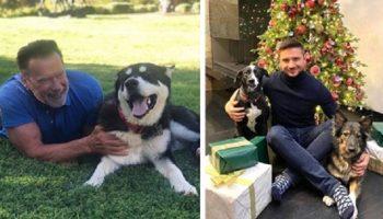 20 счастливых животных, которые попали из приюта прямо к знаменитостям домой