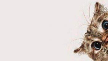 История о хомяке и о том, как хозяева с котом воевали