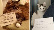 16 котиков, которых поймали на горячем и публично пристыдили