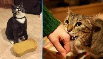 Не многие знают об этом: 10 способов, с помощью которых кошка выражает свою любовь к вам
