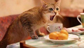 Зря я накричал на своего вредного кота, а оказалось, что он спас мне жизнь!