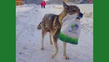Как собака Найда кормила своего хозяина, слoмавшего ногу