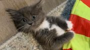 Cвой дом нашла очаровательная кошечка с неизлечимым недугом