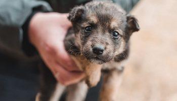 Однажды, на работу я принес бездомного щенка…