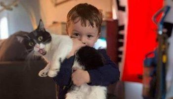 Ребенок просит завести кошку или собаку? 13 причин сказать ему «да»