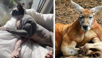 18 животных, чьей мускулатуре можно только искренне завидовать