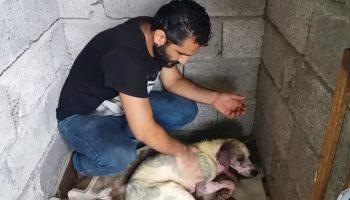 Мужчина не смог пройти мимо истощенной собаки без шерсти, которая умирала на обочине