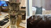 18 примеров, когда люди обнаруживали у себя дома совершенно чужих котов