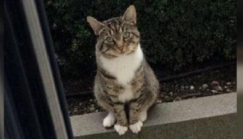 Приходя к соседскому дому каждый день, кот приглашает любимую подругу на прогулку