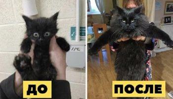 Трогательные фото бездомных котят до и после того, как они нашли дом