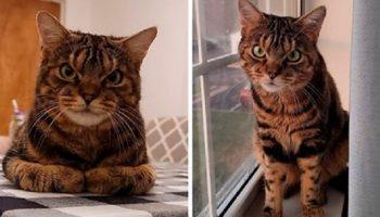 Кот, который выглядит как отъявленная злюка, обладает добрым сердцем