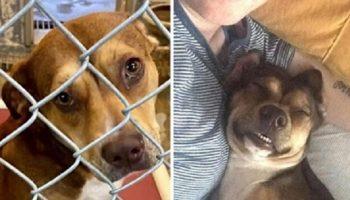 15 собак до и после того, как их жизнь, наконец-то перестала быть собачьей и они нашли в дом